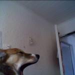 wcp_zoo_1314037411