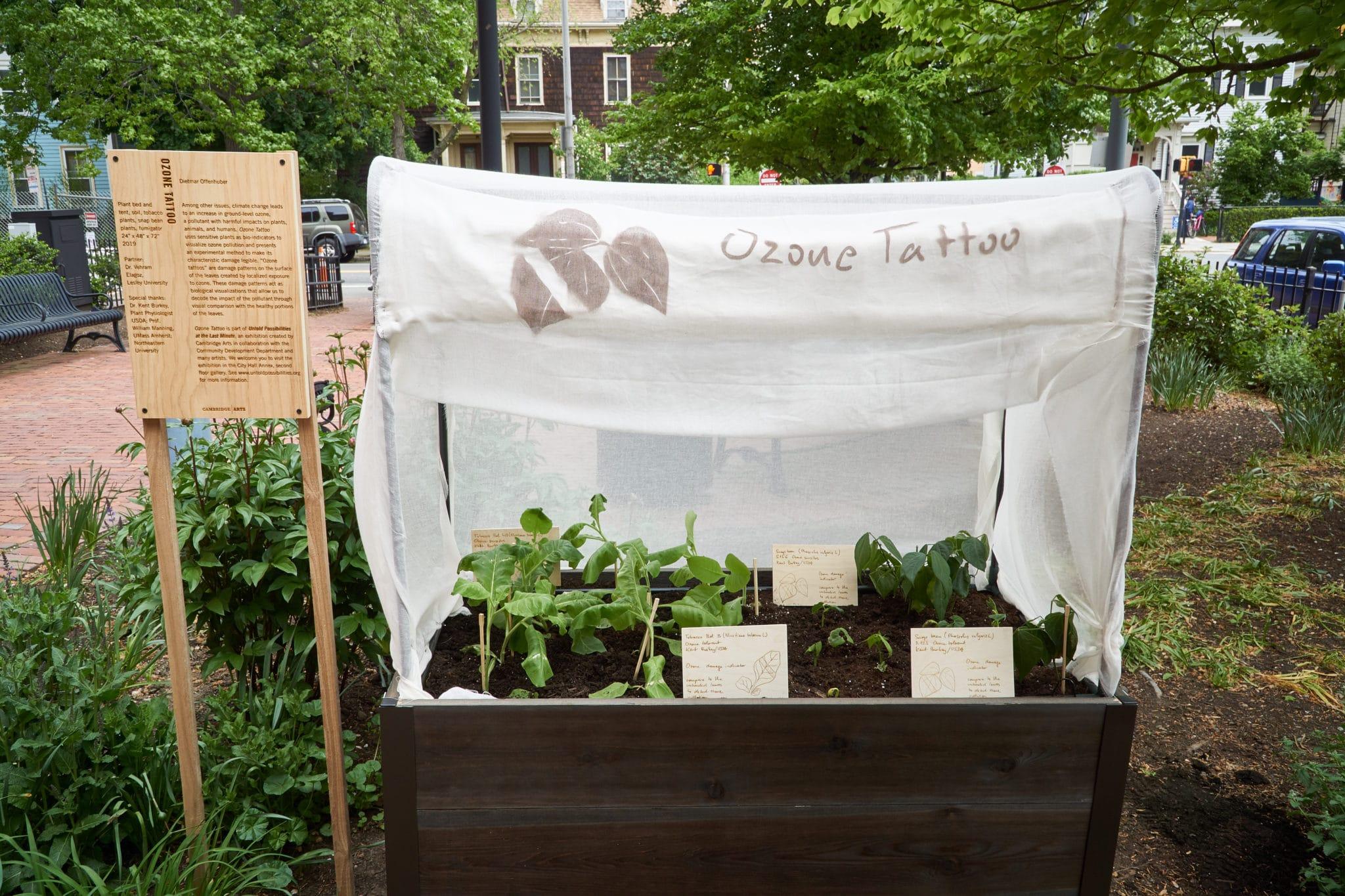 exhibition view ozone garden installation